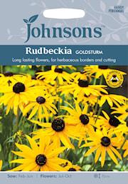 strlrudbeckia-goldsturm-1