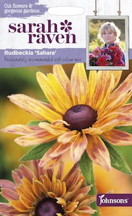 rudbeckia-sahara-1