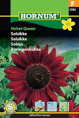 solros-velvet-queen-1