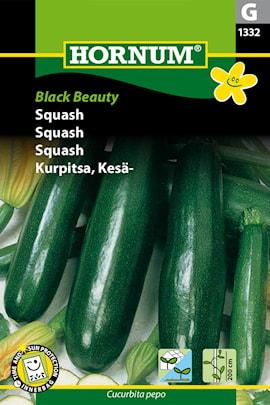 squash-black-beauty-1