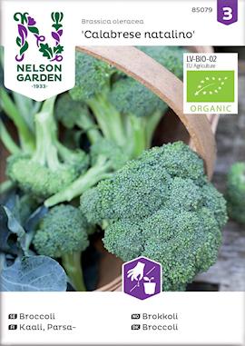 broccoli-calabrese-natalino-organic-1