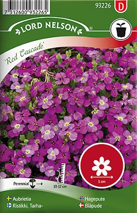 aubrietia-red-cascade-1