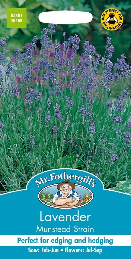 Lavendel 'Munstead Strain