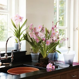 green-basics-orchid-17cm-transparent-1