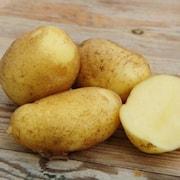 potatis--nicola-1kg-1