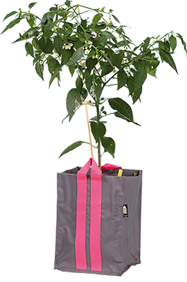 plantkasse-blueberry-medium-antracit-21l-1