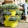 green-basics-vertical-garden-46cmlime-green-5