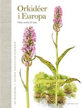 orkider-i-europa-vilda-vackra-vna-1