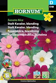 rosenskra-blandning-sonata-nice-1