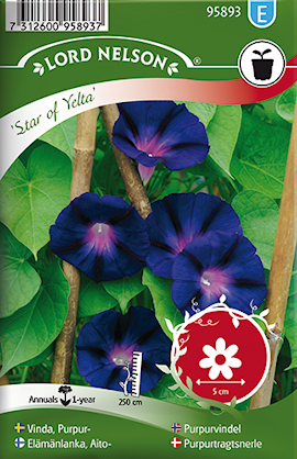 vinda-purpur--star-of-yelta-1