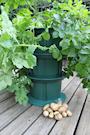 odlingssystem-fr-potatisodling-p-hjden-2
