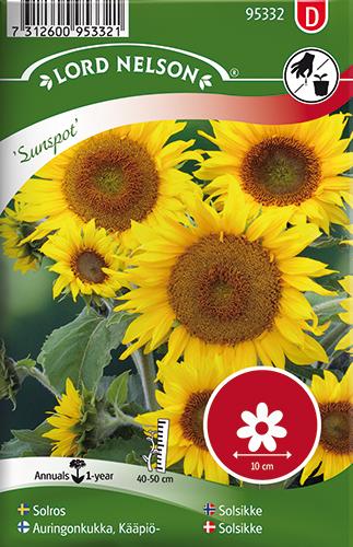 Solros 'Sunspot