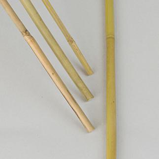 Bambukäpp 100cm,- 10st