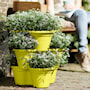 green-basics-vertical-garden-46cmlime-green-4