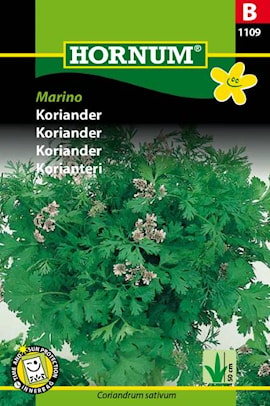 koriander-marino-1