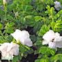 parkvildros-blanc-double-de-coubert-a-kval-co-2