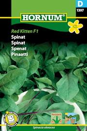 spenat-red-kitten-f1-1