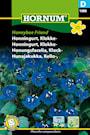 honungsfacelia-klock--honeybee-friend-1