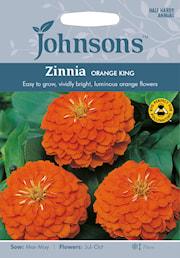 zinnia-orange-king-1