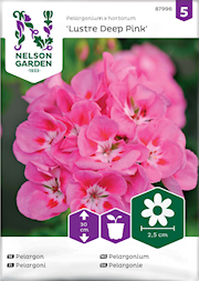 pelargon-lustre-deep-pink-1