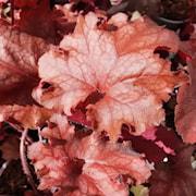 alunrot-chateau-rouge-12cm-kruka-1