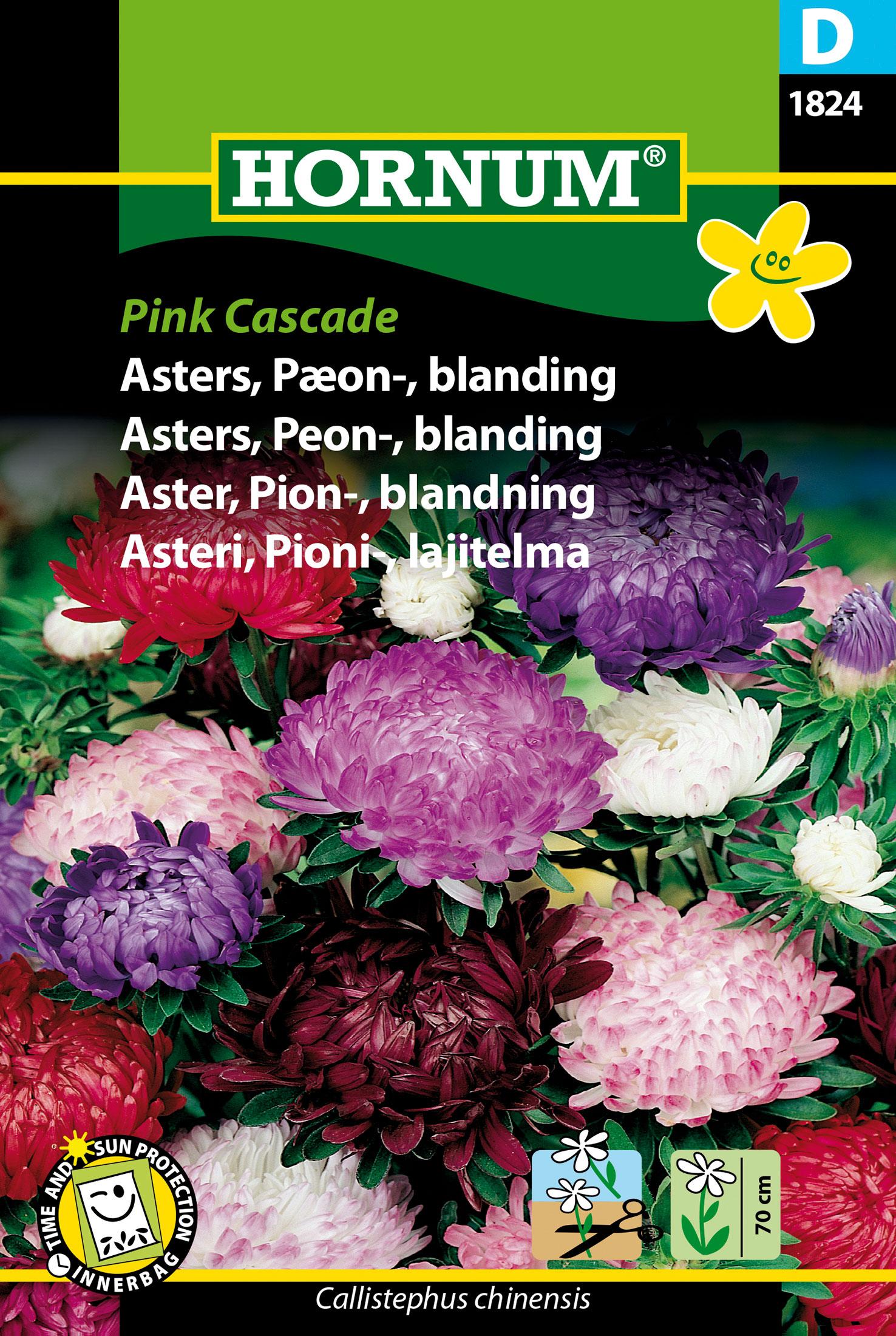 Aster, Pion-, 'Pink Cascade