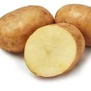 potatis---maria-1kg-1