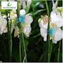 orkidklmma-fjril-neon-mix-5st-1