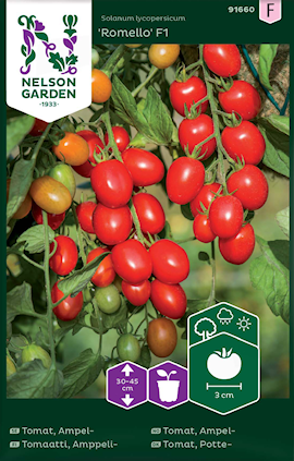 tomat-ampel--romello-f1-1
