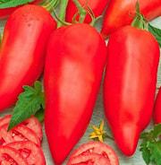 tomat-cornabel-105cm-kruka-1