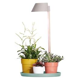 plant-light-care-glacier-grey-1