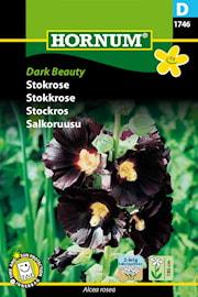 stockros-dark-beauty-1