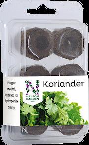 hydroponisk-easy-to-grow-koriander-1