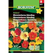 blomsterkrasse-blandning-roland-1