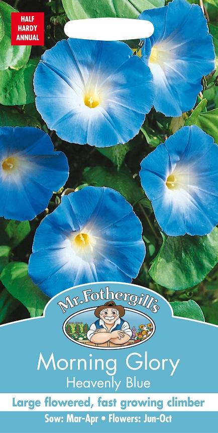 Blomman för dagen 'Heavenly Blue