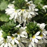 femtunga-fancy-white-105cm-kruka-1