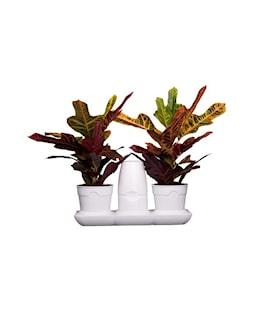 minigarden-basic-s-pots-vit-1