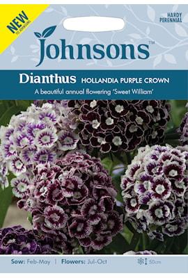 nejlika-borst-hollandia-purple-crown-1