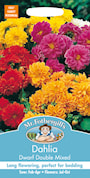 sommardahlia-dwarf-double-mixed-3