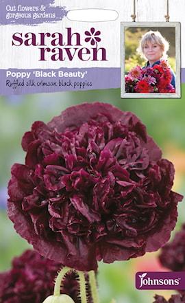 pionvallmo-black-beauty-1