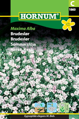 sommarslja-maxima-alba-1