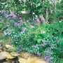 vildblomster-fr-skugga-woodland-mixture-8