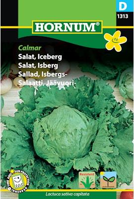 sallad-isbergs--calmar-1
