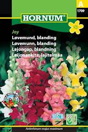 lejongap-blandning-joy-1
