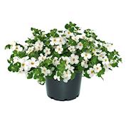 snflinga-big-white-105cm-kruka-1