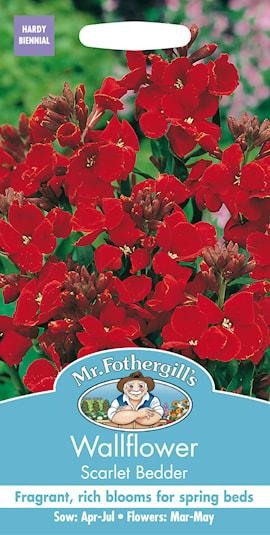 gyllenlack-scarlet-bedder-1