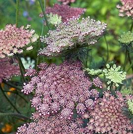 blomstermorot-dara-105cm-kruka-1