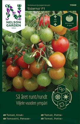 tomat-kruk--siderno-f1-1