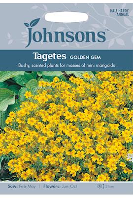 tagetes-golden-gem-1
