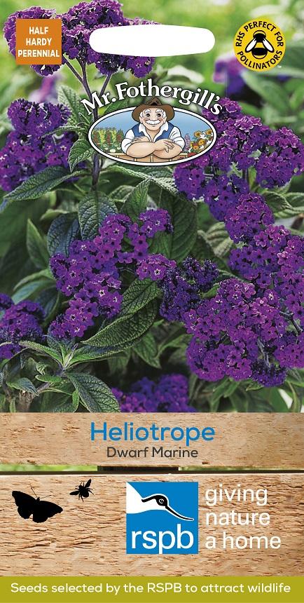 Heliotrope 'Dwarf Marine